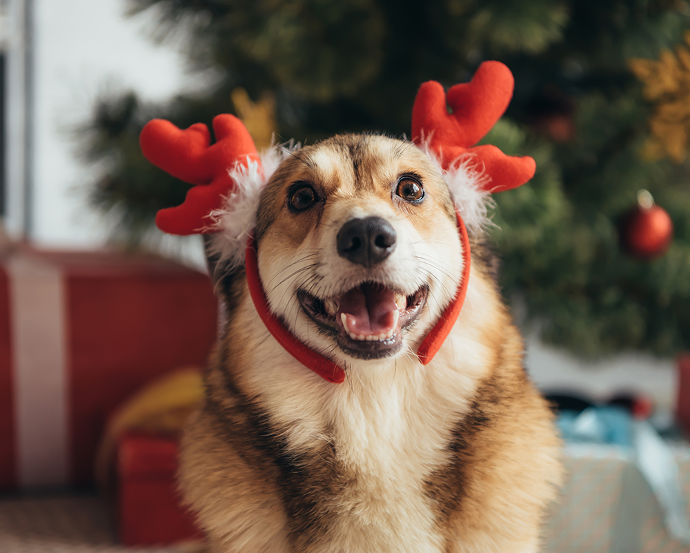 Saturday, December 7, 2019: Happy Howlidays
