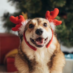 2019-12-07 - Miracle at The Haymaker - Happy Howlidays